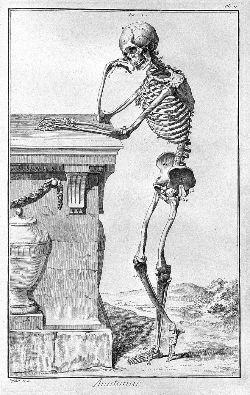 L0006620 Standing skeleton, leaning on plinth